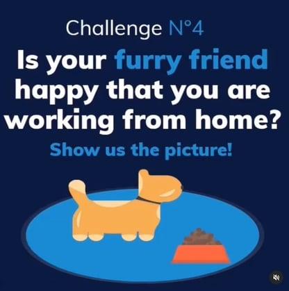 remote-work-challenge-furry-friend